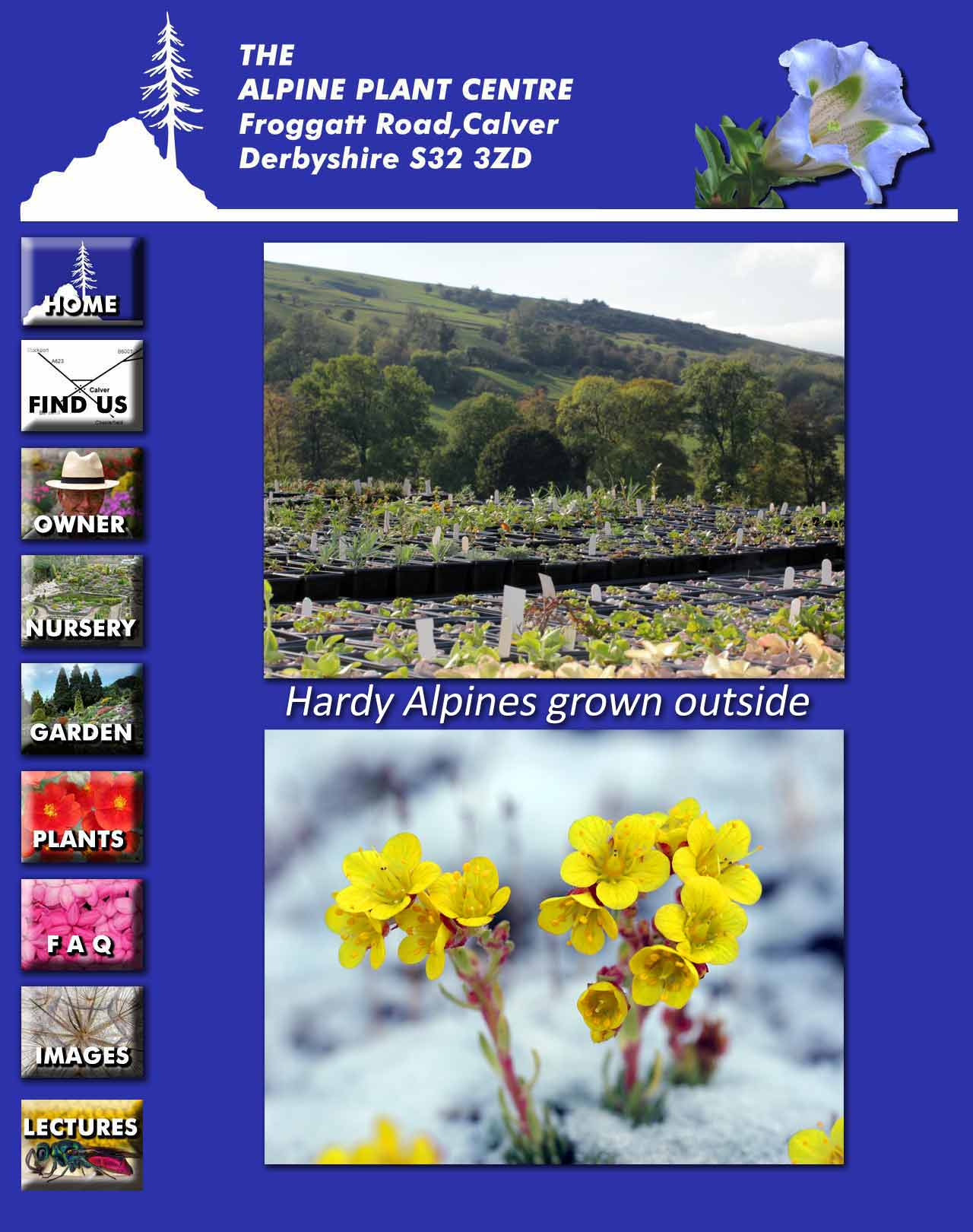 Hardy alpines page