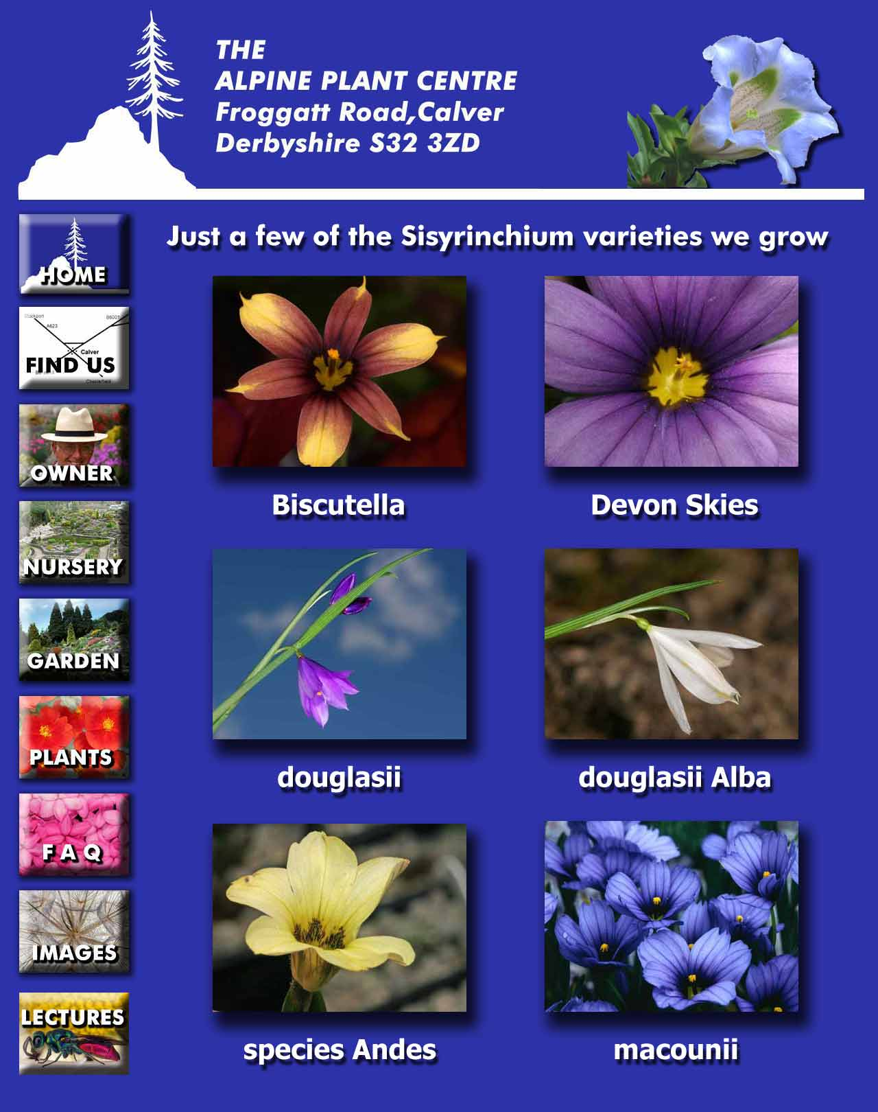 Sisyrinchium page